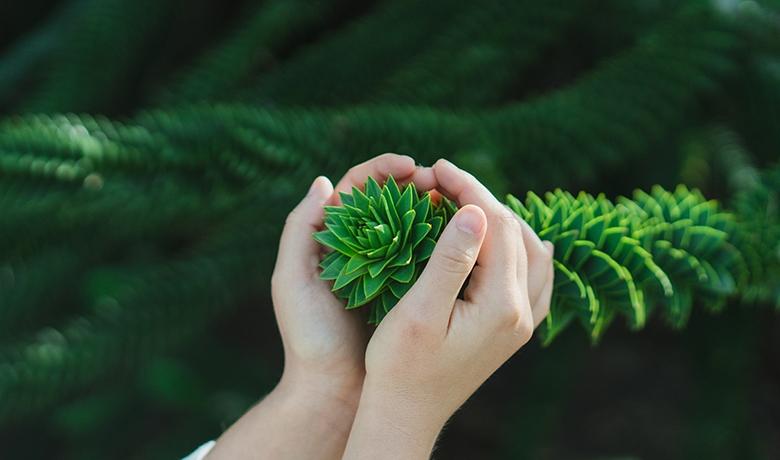 Funerales verdes, un homenaje más sustentable
